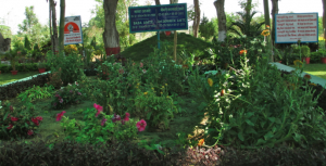 One of the most beautiful parts of the campus. Over the grave of Baba Amte and his wife grow flowers