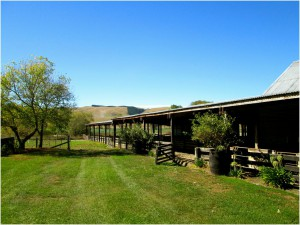 The sheep barn at Morelea FARM.