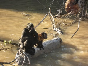 Some of the monkeys we saw.