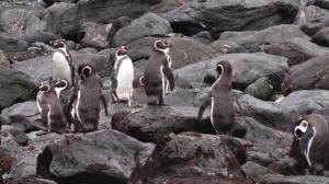 5.2 Penguins!