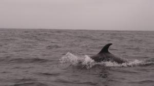 5.3 Dolphin
