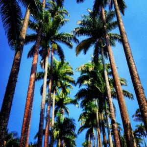 Rio Botanical Gardens