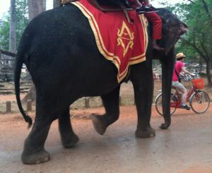 elephant photo