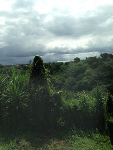 The view from the bus on the way to the Britt finca de café.