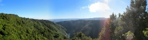 The Manawatū Gorge, just a short drive from Palmy