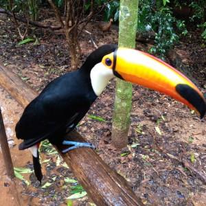 Toucan at Bird Park in Iguacu