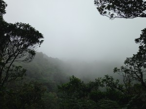 The view over the canopy of the Santa Elena cloud forest reserve.