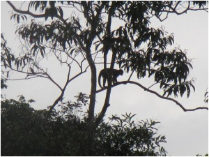 And if you look to your left, you can see the silhouette of a monkey…