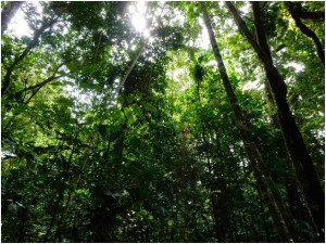 The rainforest strives for balance. An intricate equilibrium of its biomass is always distributed amongst a various amount of life forms. Each entity waits for the chance to use another's energy to build itself. This is the law of the rainforest.