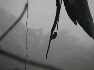 The morning mist casts pallor on the lens of this camera… and subsequently this bird.