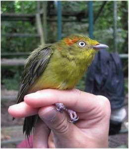 """This bird looks like it got """"ruffled feathers"""" after spending time with us."""