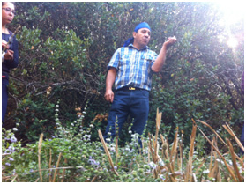 """Learning about the natural herbs used in Mapuche medicine from a Lawentuchefe – this herb is called """"menta poleo"""""""
