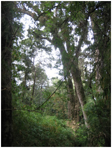 """Example of how green things are in Temuco from my hike up the """"cerro de Temuco"""" this morning"""