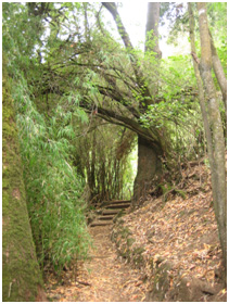 """Hiking path going up to the top of the """"cerro de Temuco"""""""
