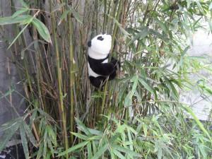 Bao Bao in SuZhou Bamboo Natural Habitat