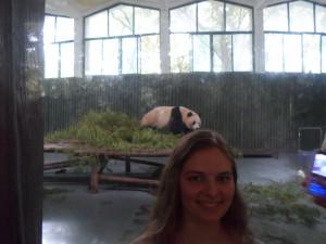 I found the panda