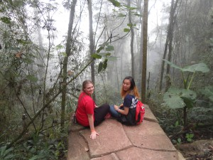 Hanging in the Rainforest