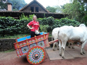 They Used to Transport Coffee this Way... Now this is my Ride to School