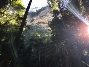 Inside the rainforest!