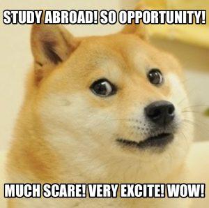 studyabroaddoge