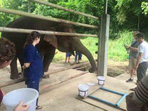 Testing the elephant's sense of smell